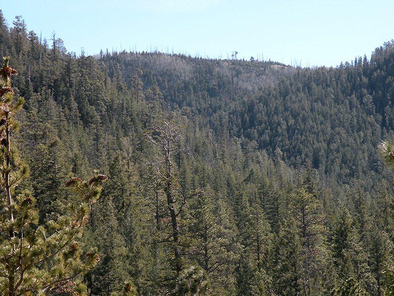 Mt. Elden